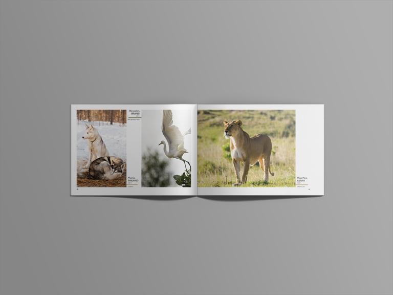 animals 22.jpg